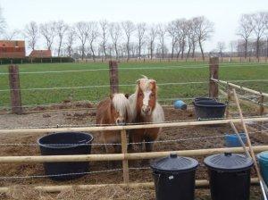 Of een paar pony's die me tijdens dezelfde wandeling aanstaarden?