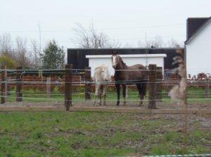 Of zullen we die twee paarden nemen. Nee... de foto is veel te onscherp