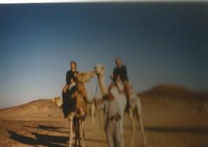 D egypte kameel